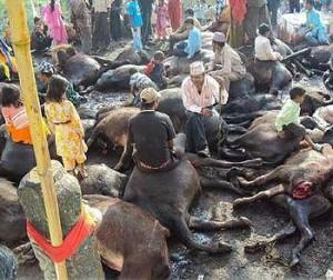 Sacrificed Animals